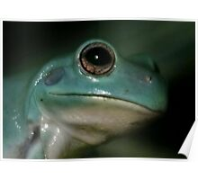 Blue Vietnamese Tree Frog Poster
