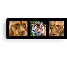 Feline Triptych Canvas Print