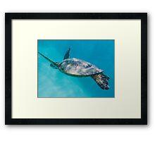 Swimming with Hawaiian Green Sea Turtle Framed Print