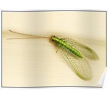 Green lacewing Poster