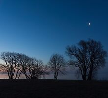 Blue Hour Moon - Bare Trees Silhouettes on the Lake Shore by Georgia Mizuleva