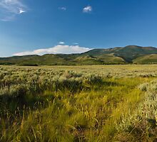 Sage brush near Strawberry Reservoir by Alan Mitchell