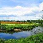 Poppy fields by Lorna Taylor
