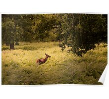 Doe in the woods Poster