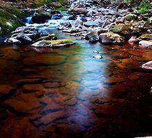 Tea Colored Trout Stream by Nazareth