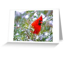Cardinal in Snowy Evergreen Tree Greeting Card
