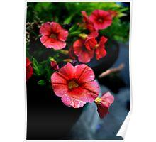 Red Petunias Poster