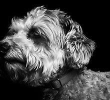 Baxter by ahmerkalam