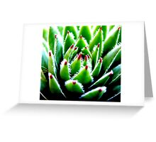 Hens and Chicks Succulent Greeting Card