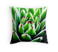 Hens and Chicks Succulent Throw Pillow
