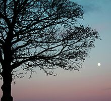 Sunsets And Low Moons by LittlePhotoHut