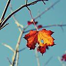 Last Leaf On The Tree by LittlePhotoHut