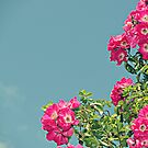 Pink Flowers Teal Skies by LittlePhotoHut