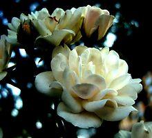 Gardenia by Koon