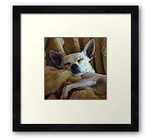 Skinny And His Blankie Framed Print