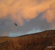 Turkey Vulture Circles Ghost Ranch at Sundown by Marielle O'Brien