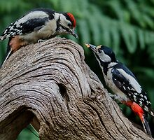 mama woodpecker feeding her son by Nicole W.
