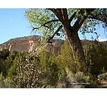 Red Rocks, Green Trees at Ghost Ranch Photographic Print