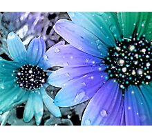 Fairy flowers part 2 Photographic Print