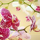 Orchid Flowers art prints Orchids Floral Botanical by BasleeArtPrints