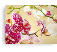 Orchid Flowers art prints Orchids Floral Botanical Canvas Print
