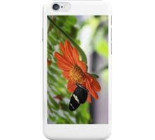 Butterfly iPhone Case/Skin