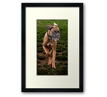 Dogs with game face on .19 Framed Print