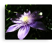 Shining Clematis Canvas Print