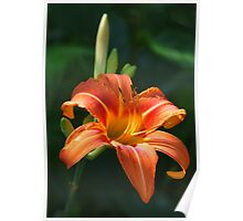 Daylily From My Garden Poster