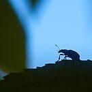 bug's dream by davvi