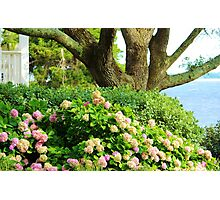 Flowers By The Sea Photographic Print