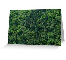 Nature Pattern on Palms Greeting Card