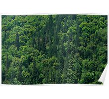 Nature Pattern on Palms Poster