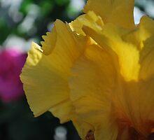 Iris like a butterfly by Lozzar Flowers & Art