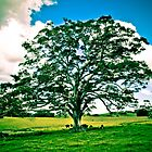 Tree by KerryPurnell
