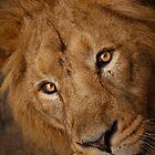 Lion Face by Monika Nakládalová