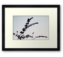 Little Butterfly Framed Print