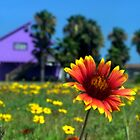 Wildflowers and a Beach House by Morgana Horn