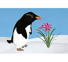 Humorous Penguin and Pink Flowers  Photographic Print