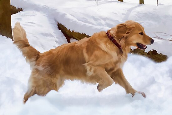 Golden Retriever in Snow by Delores Knowles