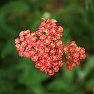 Petite Bouquet by Keeawe