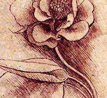 Leonardo's flower drawing by Janine Whitling