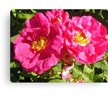 Governor General's Roses 10 Canvas Print