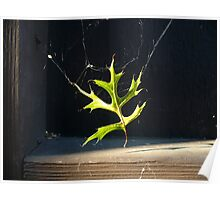 Spider Decor Poster