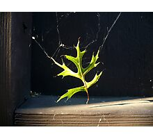 Spider Decor Photographic Print