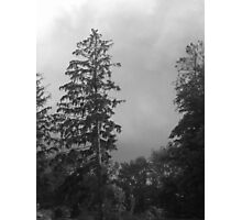 Tall in the rain Photographic Print