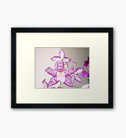 Orchid Flowers art prints Purple Orchids Framed Print
