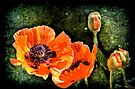 Oriental Poppies family by LudaNayvelt
