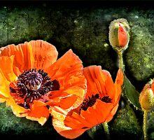 Oriental Poppies family by LudaNayvelt