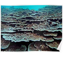 CORAL COVER Poster